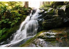 森林中被长满苔藓的岩石和植物包围的瀑布的_767790401