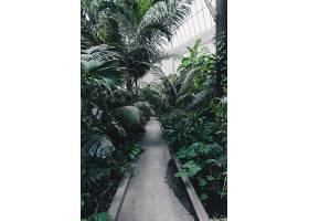 拥有热带异域植物和树木的植物园的美丽镜头_781055201