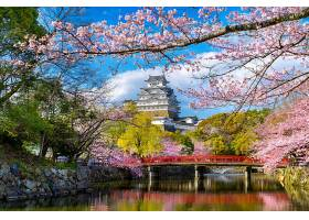 日本姬路的樱花和城堡_1082439801