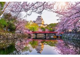 日本姬路的樱花和城堡_1082440501