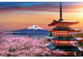 日本春天有樱花日落时有菊花塔和富士山_1082451401