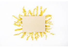 在阳光下装饰的黄色含羞草花白色背景上有_245487001