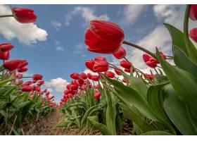 在阳光和蓝色多云的天空下田野里低角度拍_999069201