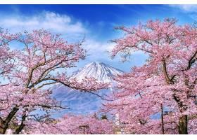 日本春天的富士山和樱花_1082444501