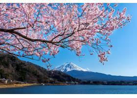 日本春天的富士山和樱花_1082454101