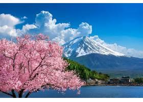日本春天的富士山和樱花_1082454401