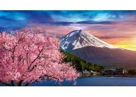 日本春天的富士山和樱花_1082454901