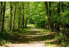 在阳光明媚的日子里林木中间的土路_789995501