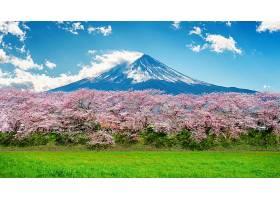 日本春天的富士山和樱花_1082458401