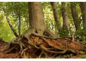 在阳光明媚的日子里森林里一棵树干粗壮的_1075973201