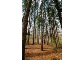 森林里有几棵高大的树_1120641901