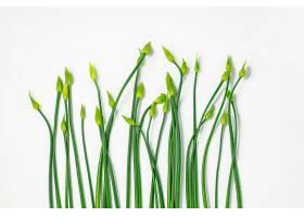 植物萌发的特写镜头_96647201