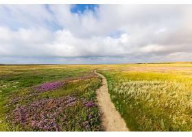 在多云的天空下草地中央的一条狭窄的小路_1047751801
