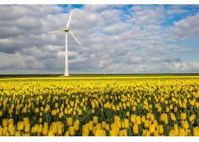 在多云的天空下远处有一辆风车的黄色花田_1011999301