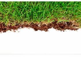 新鲜的春天绿草白色背景上隔离着泥土_100783101