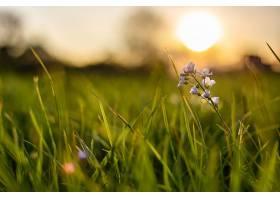 在模糊的背景下一朵小花在新鲜的绿草中生_1120662201