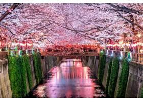 日本东京樱花沿着目黑河排成一排排_1082455701