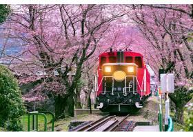 日本京都浪漫的火车穿过樱花隧道_1082438001