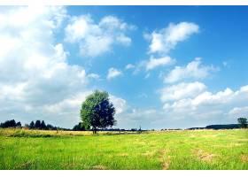 在阳光明媚的日子里草地上的一棵树_94378101
