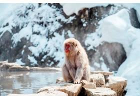 日本的雪猴_469600701