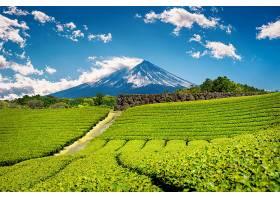 日本静冈的富士山和绿茶种植园_1082429801