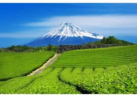 日本静冈的富士山和绿茶种植园_1082444901
