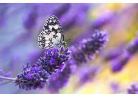 坐在紫花上的蝴蝶_898159701