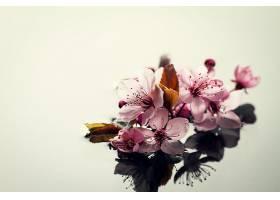 温泉自然概念水上漂亮的粉红色紫色花朵的_116011101