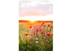 夏季野花田野上的日落免费照片_1130962601