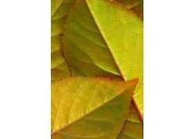 特写绿叶和棕叶_1163118901
