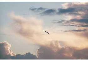 天空多云的飞鸟的剪影_850714201