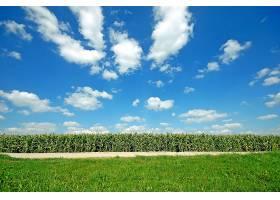 天空布满云彩的大田作物_94440001