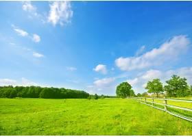 有树和木栅栏的草地_94517901