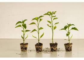 室内盆栽植物在一个房间里并排生长_1194262601