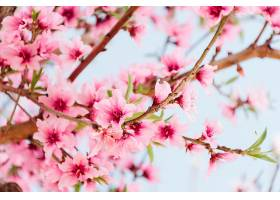 树上开着美丽花朵的树枝_362451001