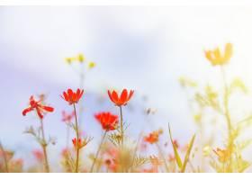 田野上长满了草紫罗兰色的花和红色的_143623001