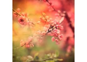 树上春花的特写_1068732501