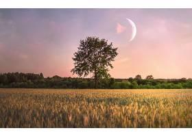 田野里只有一棵树上面有一轮月亮_1120636101