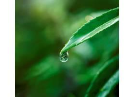 树叶上的水滴特写_301174501