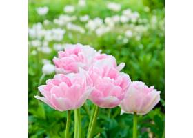 田野里美丽的粉红色花朵_696332201