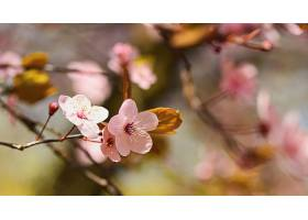 树木繁茂阳光灿烂的美丽自然风光_292450201