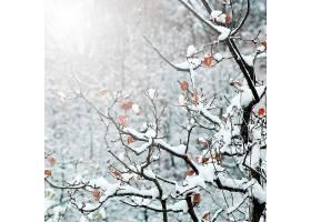 树木阳光明媚的户外蓝粉色_101401101