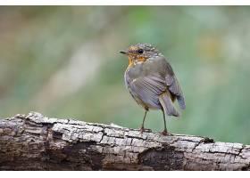 一只异国情调的鸟坐在粗大的树枝上的选择性_1204024601