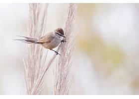 一只栖息在植物上的乌鸦的选择性对焦镜头_1167811601