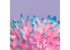一朵美丽的粉蓝相间的花的特写_1255886001