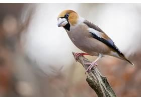 一只雄鹰雀坐在树枝上的特写镜头_1194206501