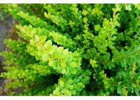 一株绿叶植物的特写镜头很适合作为背景_1106176301