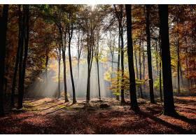 一片美丽的森林黄绿相间的树叶阳光透过_1118316801