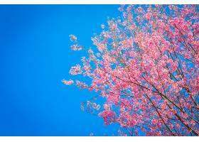 以天空为背景的奇妙的粉红色树_97873401