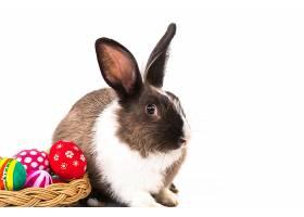 兔子在一些复活节彩蛋旁边_97802001